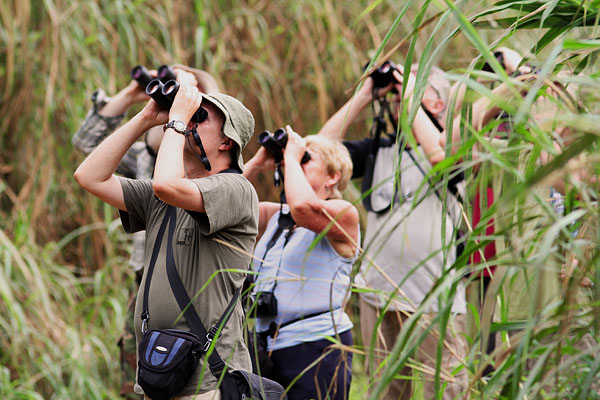 cameroon safari for birdwatchers