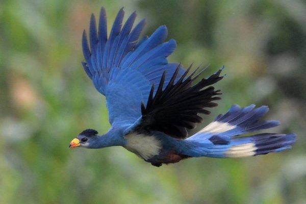 Kliknij na zdjęciu, aby przejść do galerii ptaków Ugandy